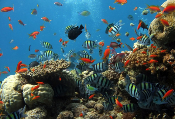 A Change for the Oceans, now